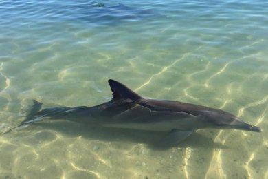 Shark Bay & Monkey Mia en Western Australia