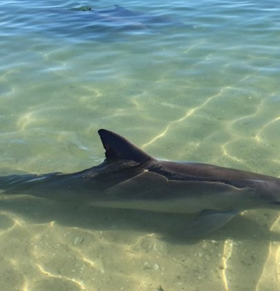 Shark Bay & Monkey Mia – Western Australia
