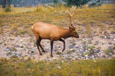 2 jours au parc national Jasper au Canada