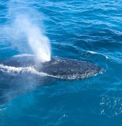 Moreton Island – Queensland – Australie