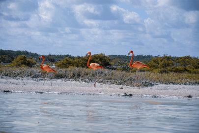 Rio Lagartos & Las Coloradas sur la péninsule du Yucatan au Mexique